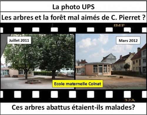 Arbres maternelle Colnat (30 mars).jpg